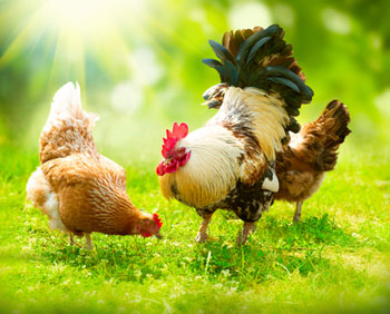 Saúde animal no Brasil
